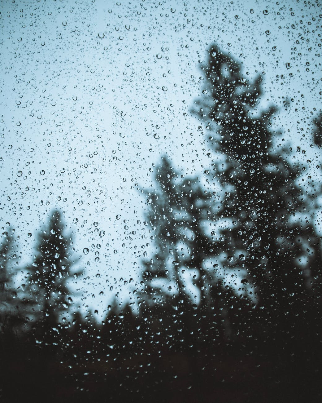 overgrown trees from window with drops in rainy weather